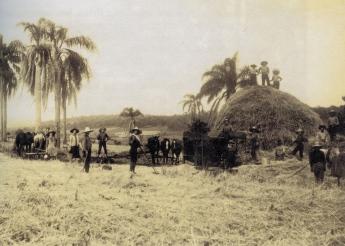 brazilija-567